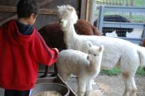 farm-events-boy-feeding