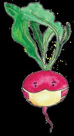Kingston-radish